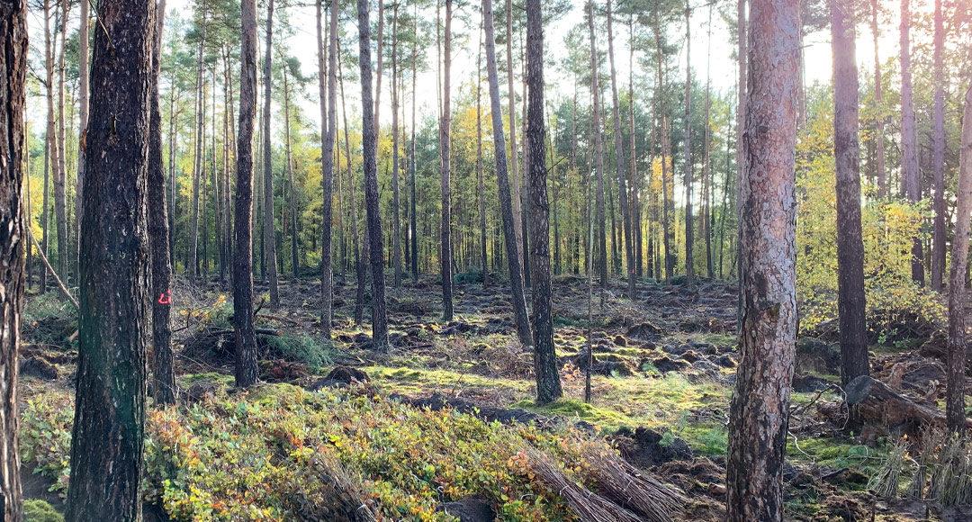 Wald, Baum, Baumpate, Blätterwald, Trinkwasser, Artenvielfalt, Laubwald