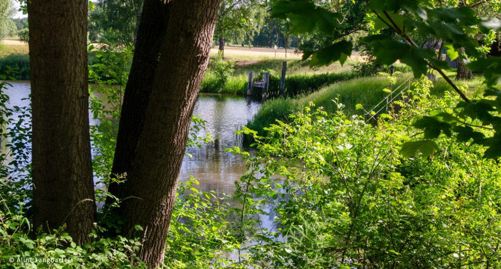 Wasser mit Bäumen